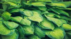 picture of green leaves